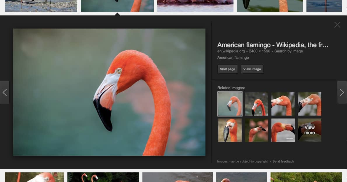 Flamingo image in Google Image Search.
